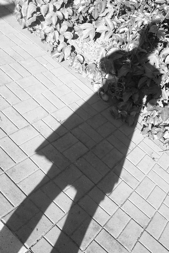 Shadow_sunday_023